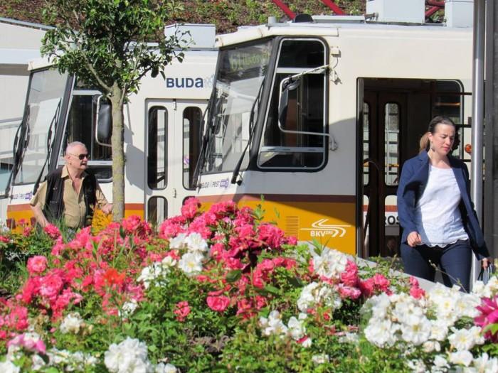 Trams at Budapest's Széll Kálmán tér (formerly Moszkva tér) in June 2016. Photo: Christopher Adam.